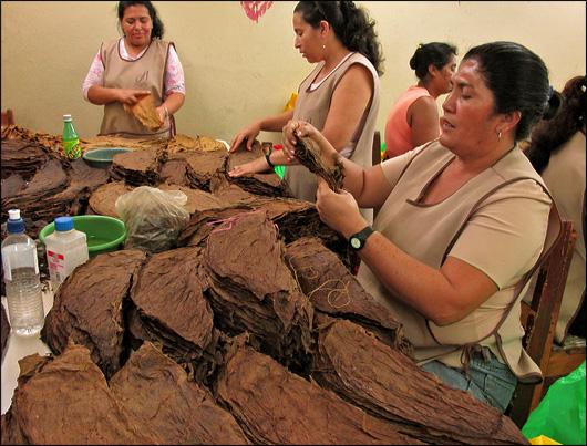 Sorting tobacco leaves at Tabacalera Fernandez.