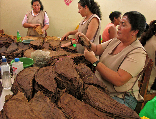 Sorting tobacco leaves at Tabacalera Fernandez.